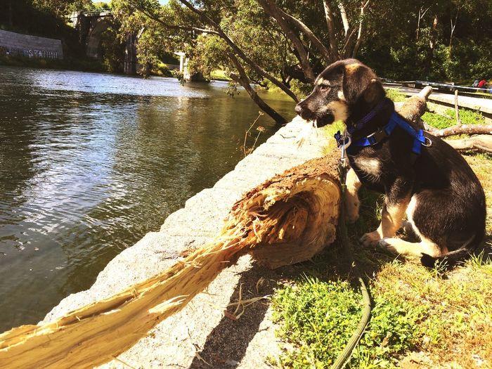 Oli Perro Negro Dog Cachorro Animals Sunlight Water Nature Real People Day