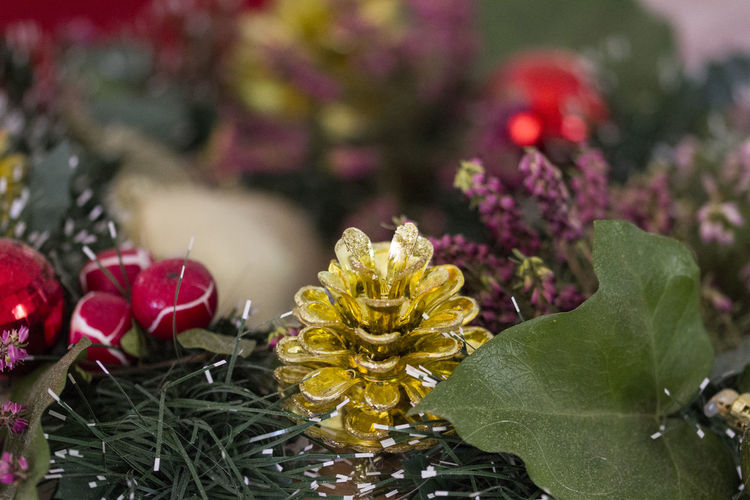 Christmas Wreath Beauty In Nature Blooming Close-up Closeup Photography Day Flower Flower Head Fragility Freshness Growth Leaf Nature No People Outdoors Petal Plant