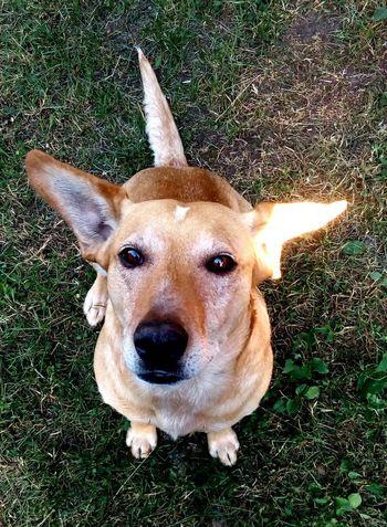 Dog One Animal Day Outdoors Mylove ❤️ Mydog Bigeyes Home