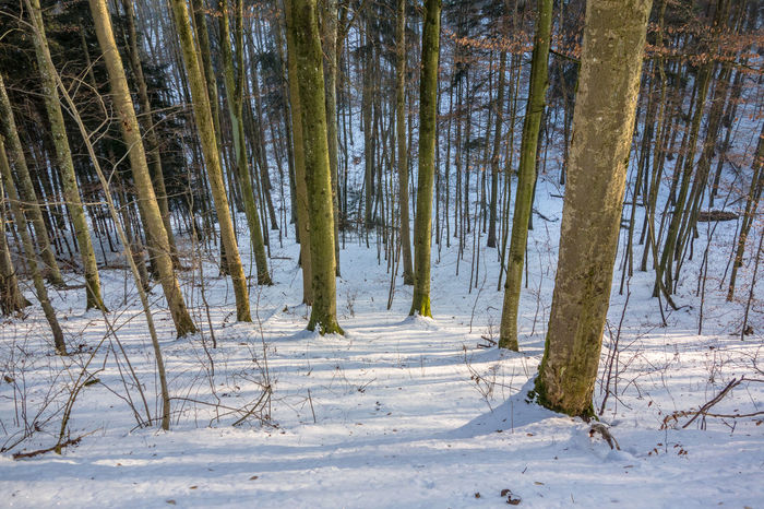 Beauty In Nature Cold Temperature Day Forest Landscape Nature No People Outdoors Sky Snow Tree Tree Trunk Winter Winter Woods