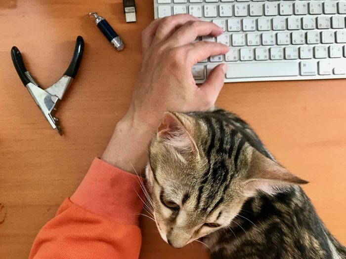 Pets Animal Animal Themes Domestic Mammal Cat Domestic Animals One Animal Domestic Cat Vertebrate Feline Computer Human Body Part Indoors  Human Hand Technology Computer Keyboard Keyboard Real People Hand Body Part Whisker Pet Owner Finger