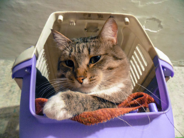 Portrait of cat in plastic basket