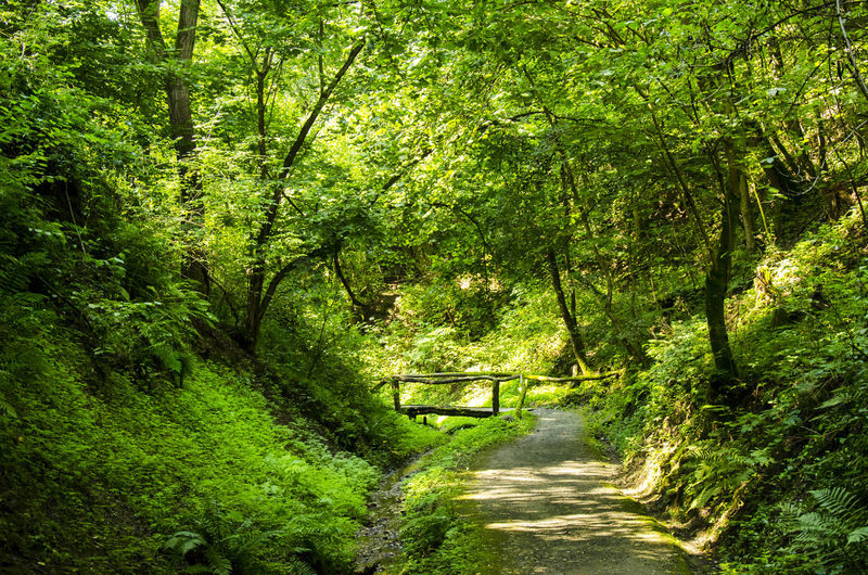 Beauty In Nature Day Dirt Road Forest Forest Photography Forestwalk Green Green Color Nature Nature Nature Photography Nature's Diversities Nature_collection Naturelovers Naturephotography Outdoors The Way Forward Tree