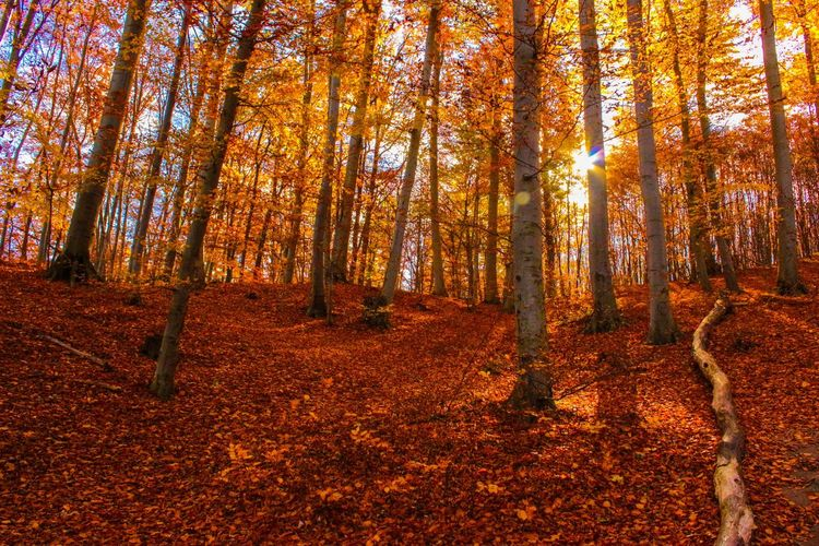 Breathing Space Autumn Leaf Forest Nature Change Tree Beauty In Nature WoodLand Scenics Redhead Tranquil Scene Tree Trunk Sunlight Multi Colored Outdoors Vitality Branch Day Beauty Landscape