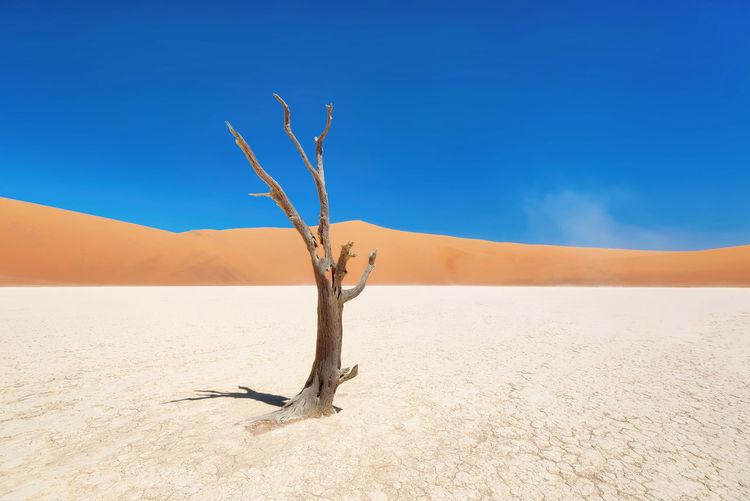 Dead tree on sand against clear sky