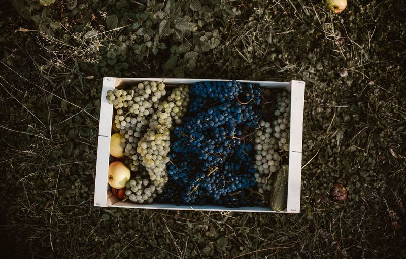 High Angle View Of Fruits In Box On Field
