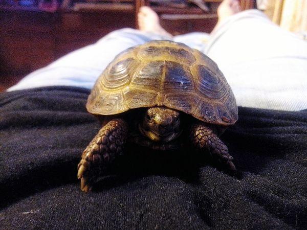 черепаха моя животные дома