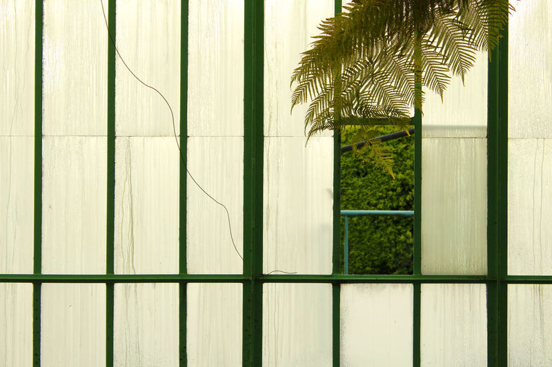 Architecture Close-up Day Glass Nature Palm Tree Serres De Laeken (Brussels). The Architect - 2017 EyeEm Awards Tree Window
