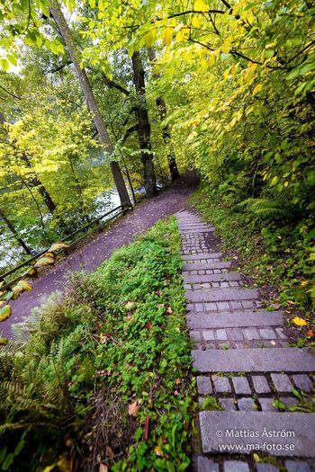 Stairs by the stream... www.ma-foto.se or kik me if you wanna know more about me and my pix kik: mafoto Tree The Way Forward Footpath Growth Plant Green Color Scenics Outdoors Day Beauty In Nature Long Non-urban Scene Tree Trunk Nature Narrow Branch Stairs Stairs_collection Stairs In Nature Autumn Colors Fall 14mm2.8 Idyllic Kikme Fall Leaves