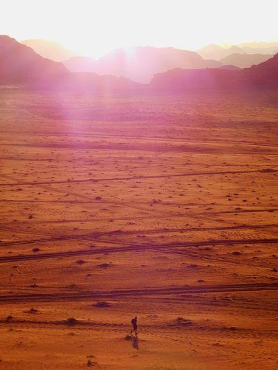 High angle view of man walking on desert
