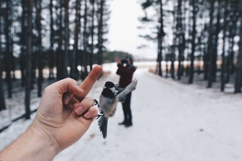 Cropped Hand Showing Obscene Gesture In Front Of Great Tit And Man On Road