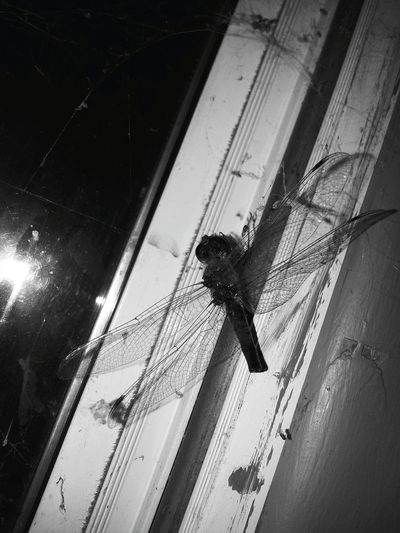 Here Belongs To Me Every Picture Tells A Story this is the front window in the building my apartment is in. .. Insect Porn Photography Is My Escape From Reality! Late Night Picture Photographic Memory EyeEm Gallery Blackandwhite Photography Dead But Free Bugsofeyeem its Wings Hauntingly Beautiful