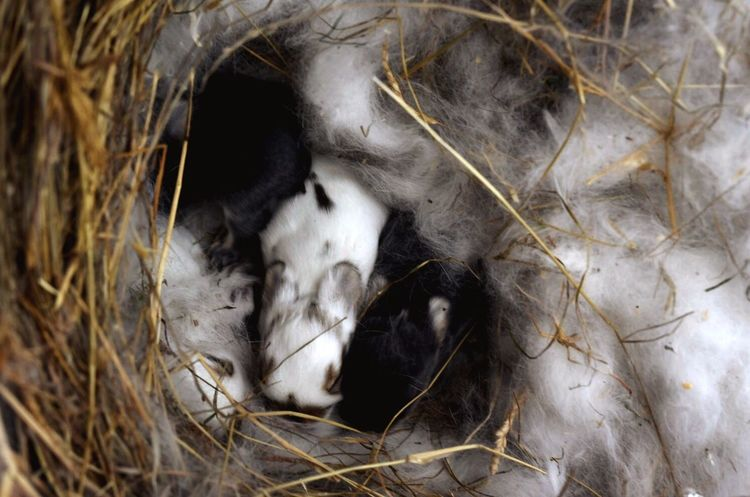 Newlife Sleeping Animal Animal Wildlife Animal Themes Close-up Young Animal Mammal Relaxation Animals In The Wild Lying Down No People Nature Day Outdoors Rabbits Rabbit Baby Rabbit Baby Rabbits New Life Nature Animals In The Wild Domestic Rabbit