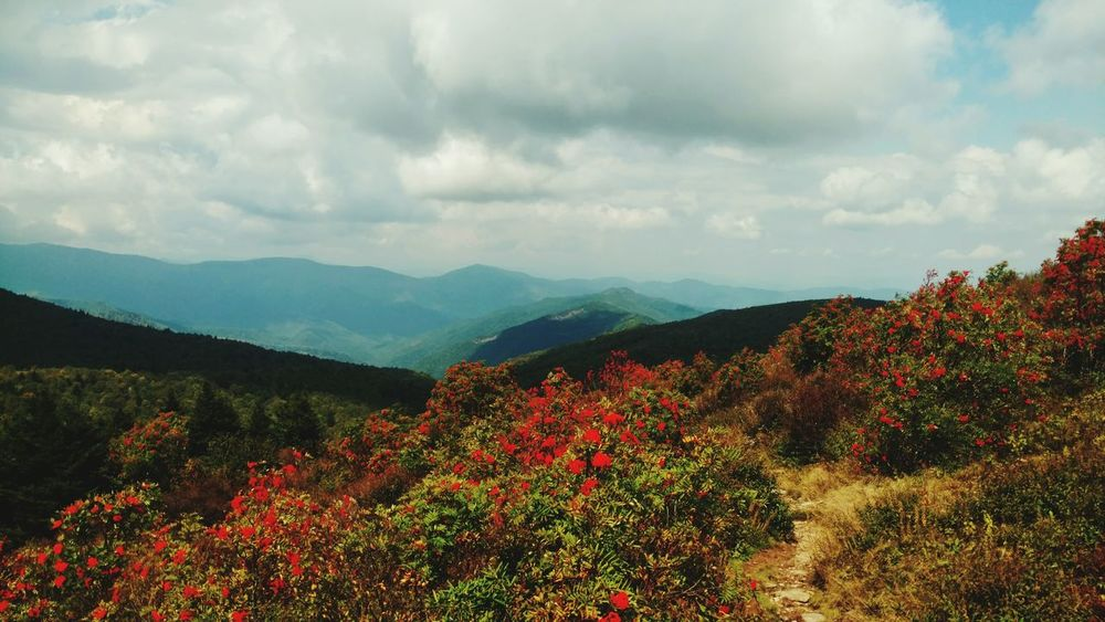 Mountain Scenics Tranquil Scene Flower Red Beauty In Nature Mountain Range Travel Destinations Nature Asheville Mountain View Blueridgeparkway Blueridgemountains Nature Asheville, NC Hiking North Carolina Nature Photography Beauty In Nature Outdoors Landscape Clouds And Sky