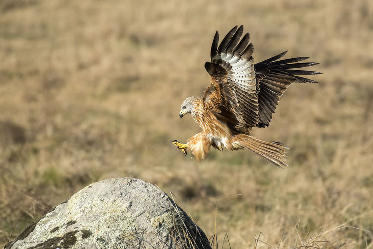 Close-up of a bird flying over rock