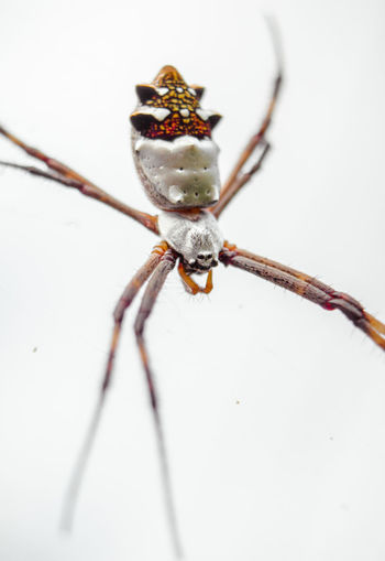 8 Legs Macro Photography Spider Animal Animal Themes Animal Wildlife Animals In The Wild Arachnid Arthropod Close-up Insect Invertebrate Macro Nature No People One Animal Spider Web