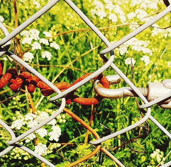 Fence Old Meets New Eyeem Old Meets New Hook Flowers New Meets Old Eyeem New Meets Old Connected EyeEm Connection Rusty Rusty Things EyeEm Gallery Nature New And Old Rust The Great Outdoors - 2016 EyeEm Awards Eyeem Details EyeEm Best Edits Eye4photography  Follow4follow Outside Photography Check This Out Details Detail The Architect - 2016 EyeEm Awards
