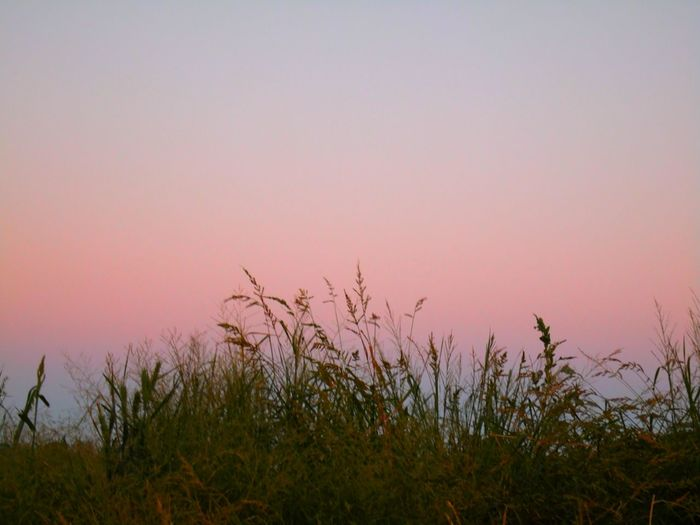 Delicate... Alpenglow Cotton Candy Sky Rural Scenes Landscape Pastel Power