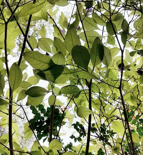 Growth Branch Green Color Ivy Leaf Plant Sky Tree Low Angle View