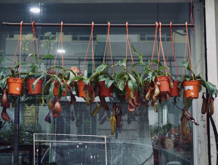 Hanging Plants Potted Plant Hanging No People Plant Fence Barrier Boundary Nature Growth Close-up Architecture Day Metal Protection Railing Food And Drink Food Outdoors Safety Security Water