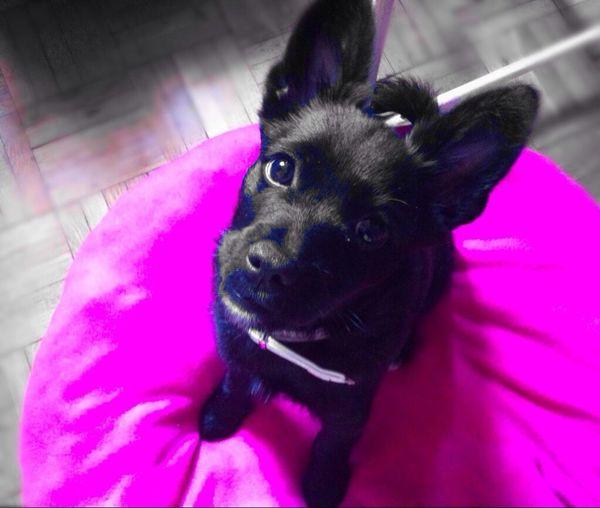 Geisha ♡
