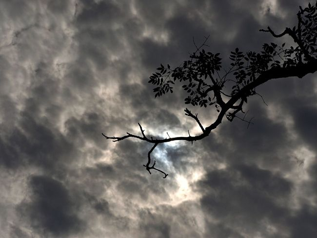 Cloud - Sky Low Angle View Sky Nature No People Outdoors Silhouette Tree Bare Tree Beauty In Nature Day Tree Silhouette Branches And Sky Branch Leaves Nature Rural Scene Light And Shadow Olympus OM-D EM-1 Growth Silhouette Springtime Beauty In Nature