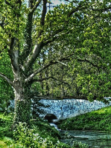 Relaxing Waterfall #water #landscape #nature #beautiful Nature Tree And Sky Taking Photos Water Reflections Tree Hugging Celbridge