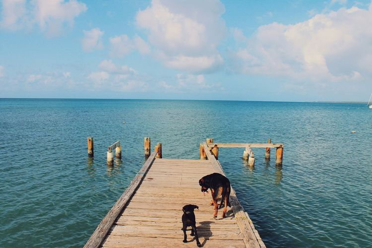 High Angle View Of Dogs On Jetty At Sea