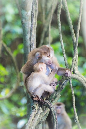 View of monkey sitting on branch