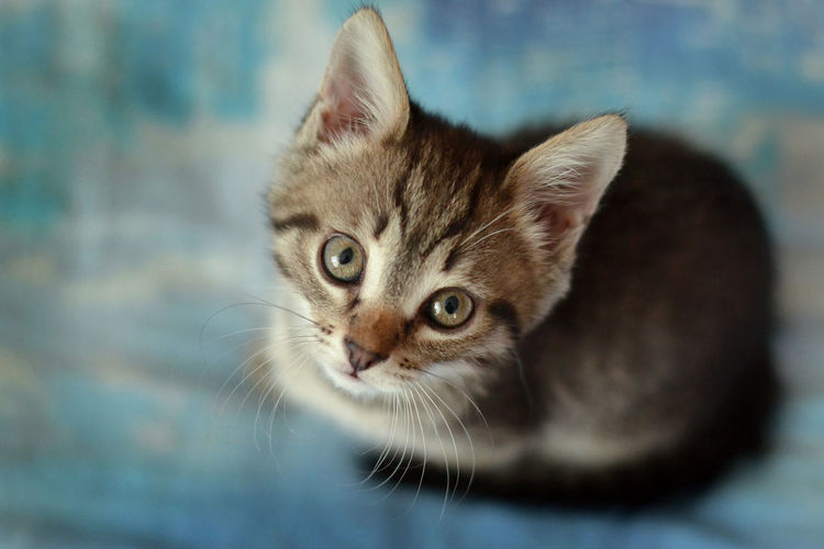 Close-up portrait of kitten sitting on table