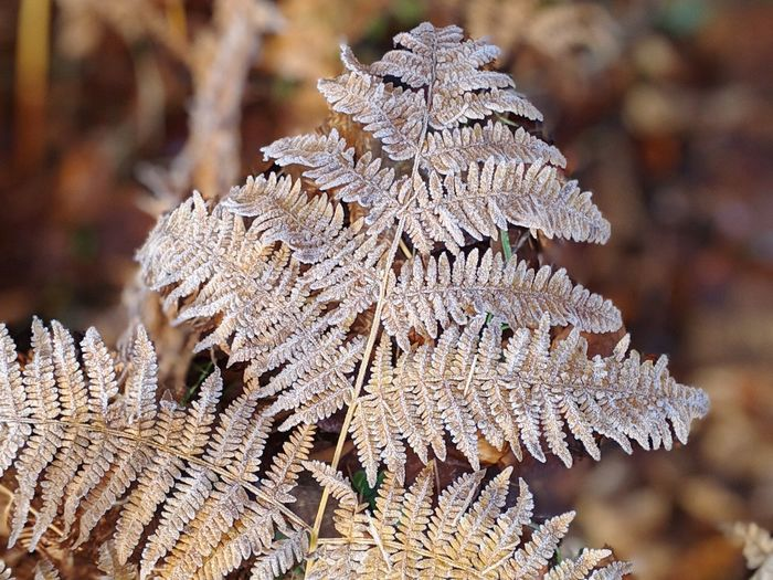 Close-up of frost on tree during winter