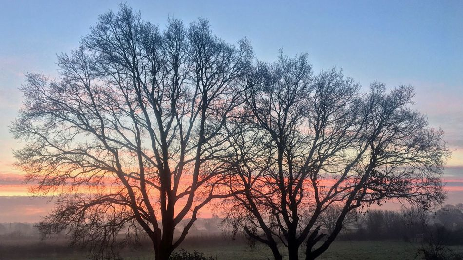 Pastel Sunrise Tree Nature Sky Beauty In Nature Bare Tree Tranquility Branch No People Tranquil Scene Outdoors Scenics Landscape Sunrise Pastel Colors