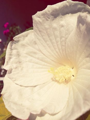 Flower Head Flower Petal Close-up