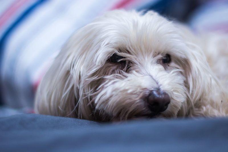Canine Mammal