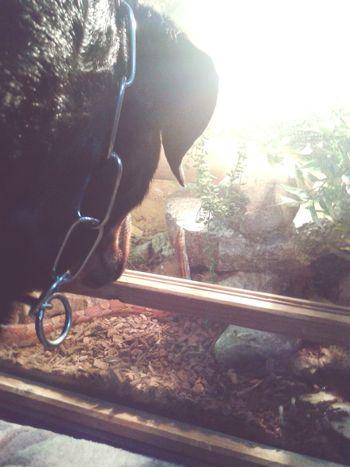 Freya immer wieder auf der Lauer, und Spike auf der Hut! :-D ;-) My Pets♥ @home Sweet Home Taking Photos