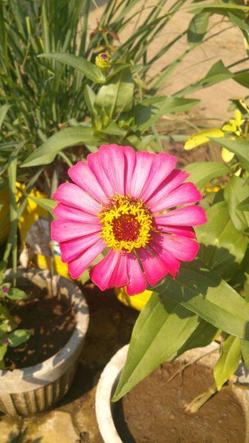"""Zenia"" from my garden Flowerporn EyeEm Flower Flowers Nature"
