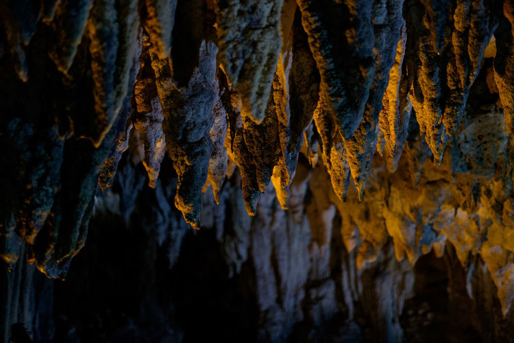 Backgrounds Cave Close-up Day Detail Dry Focus On Foreground Full Frame Geology Ishigaki  Japan Leaf Leaves Majestic Natural Pattern Nature No People Physical Geography Power In Nature Rough Season  Selective Focus Textured
