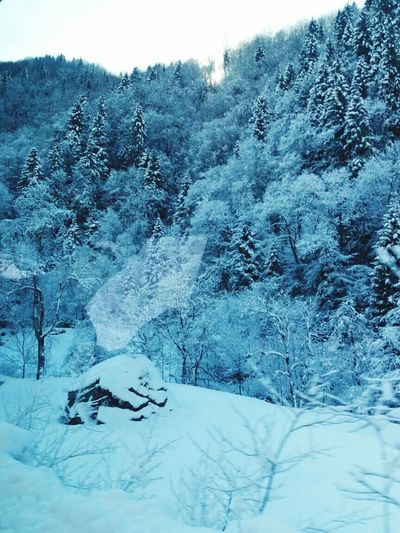 Snow Ice Rize Ridos Turkey Iceland Photography Snow Cold Temperature Winter Tree Beauty In Nature Nature No People Outdoors Landscape Sky Mountain Day Vine 🍷 Doluca Darling Moonlight Shadow Lovely Uzungöl