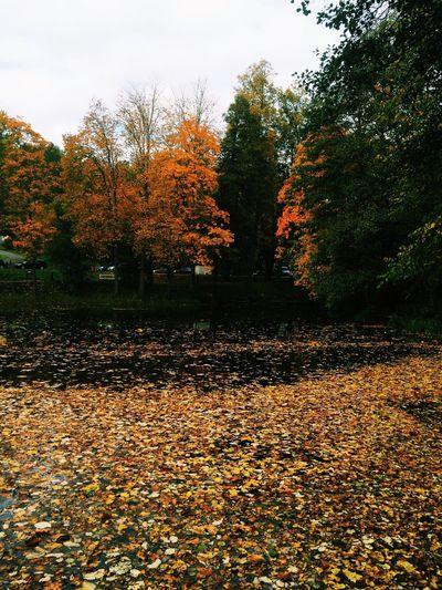 Nature Trees Leaves