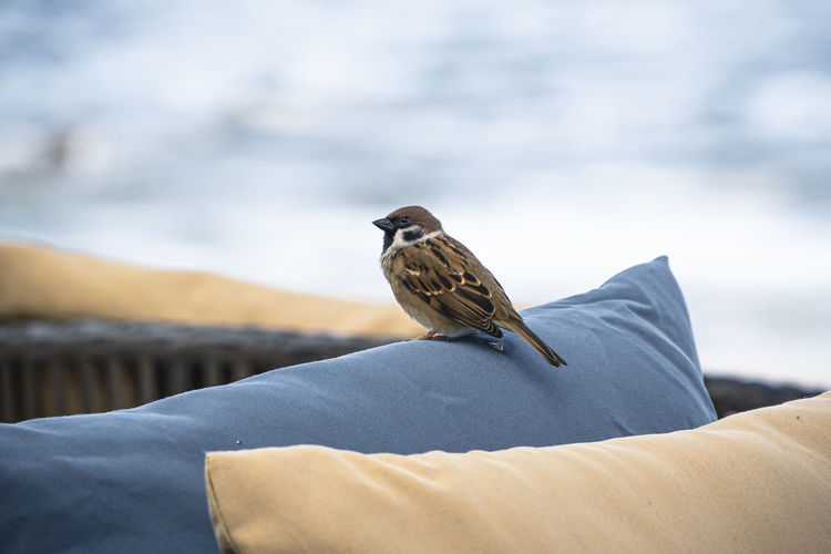 Rear view of bird perching on blanket