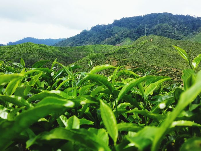 Feel fresh Relaxing Hello World Cameron Highlands Malaysia Travelling On The Road Taking Photos Enjoying Life Starting A Trip Peace And Quiet