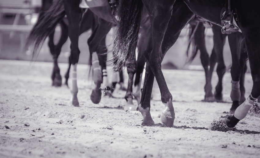 Close-Up Of Horses In Ranch