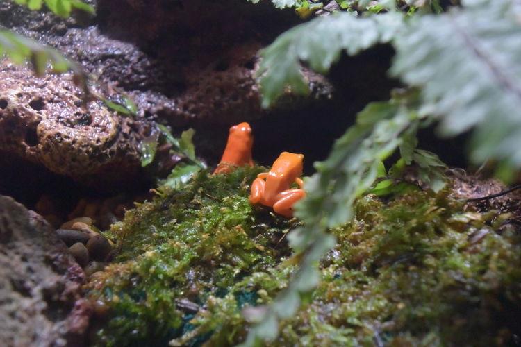 Aquarium Frog Leaf Sea Life Aquarium Wet