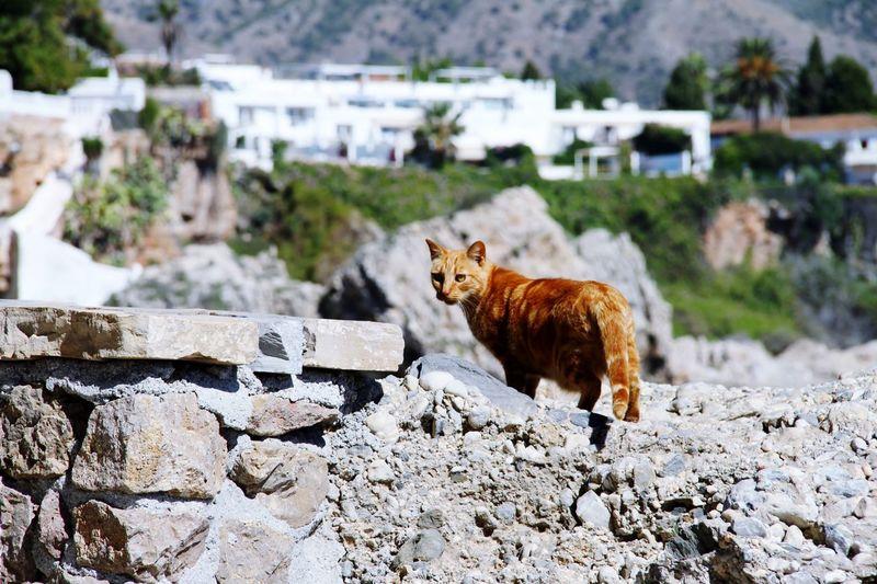Portrait of a cat lying on rock