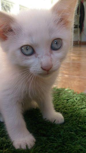 Cat Mycat Babycat Nano