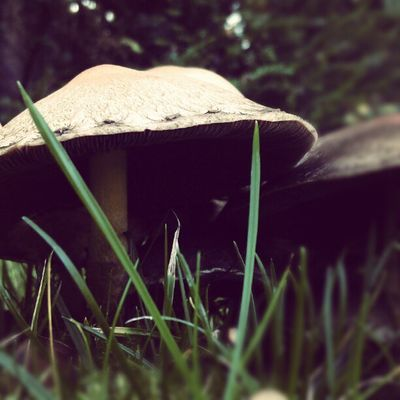 Fungus Grass