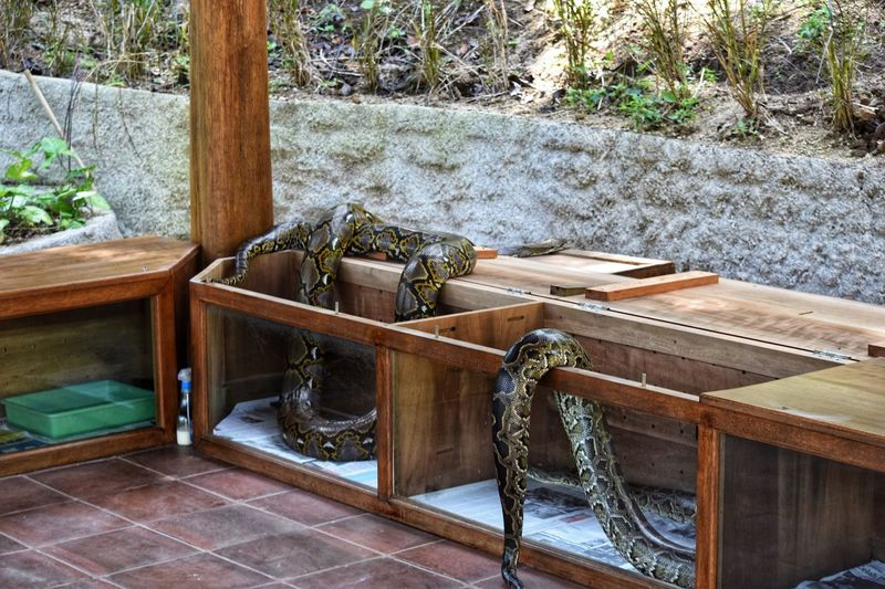 Who let the snakes out! Snakes Plant Day Nature No People Wood - Material Tree High Angle View