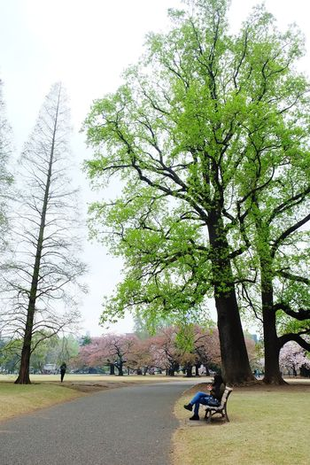 Tree Park - Man Made Space Growth Nature Day Sitting Beauty In Nature Sky Outdoors No People Shinjuku Gyoen National Garden Shinjuku,tokyo Relax Cherry Blossoms