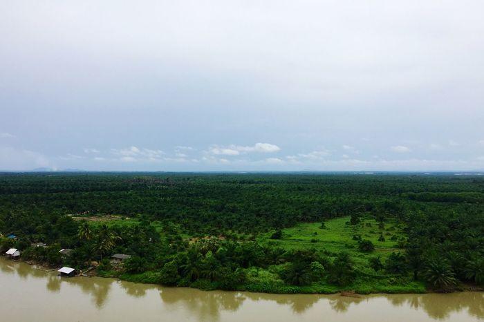 Ta Pi River Oilpalm Scenic View Suratthani Rainyseason Clouds Overcast