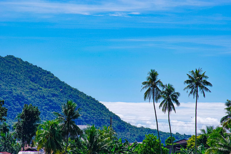 Scenic view of sea and palm trees against blue sky